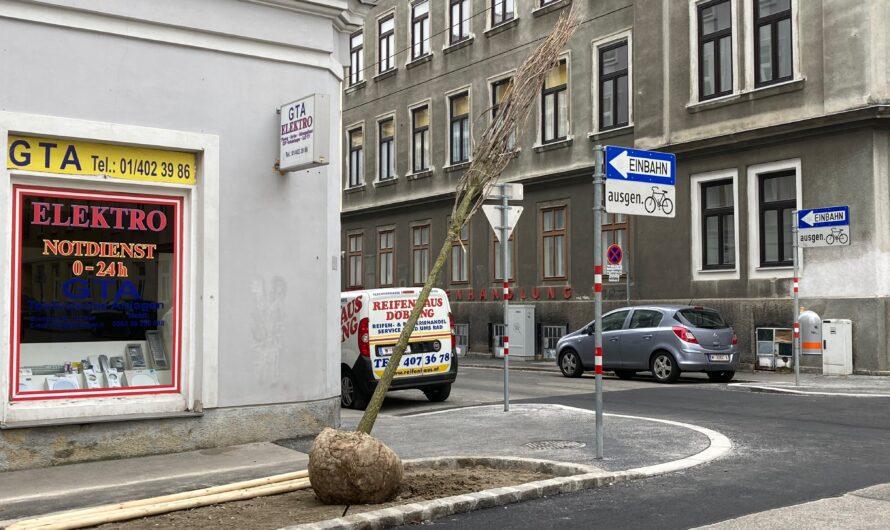 Fünf neue Bäume in der Teschnergasse