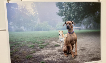 Zwei Hunde in der Hundezone @Ivo Schneider